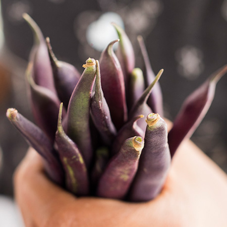 Purple king beans