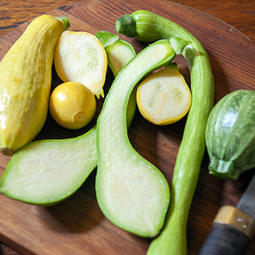 Heirloom zucchini